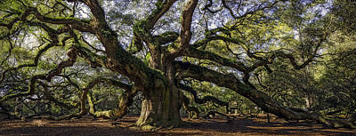 Angel Oak Art Print by Michael Donahue
