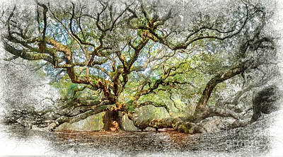 Digital Art - Angel Oak Mixed Media by David Smith