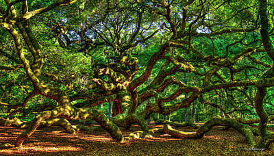 Large Oak Tree Photograph - Angel Oak Morning Shadows Charleston South Carolina by Reid Callaway
