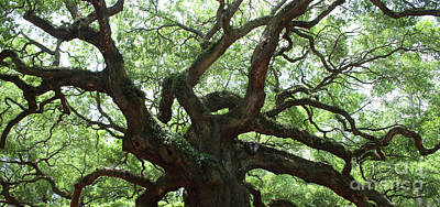 Photograph - Angel Oak Panorama by Carol Groenen