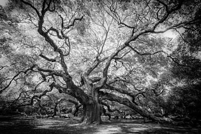 Photograph - Angel Oak by Rob Travis