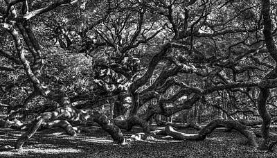 Large Oak Tree Photograph - Angel Oak Spider Lights Johns Island Art Charleston South Carolina by Reid Callaway