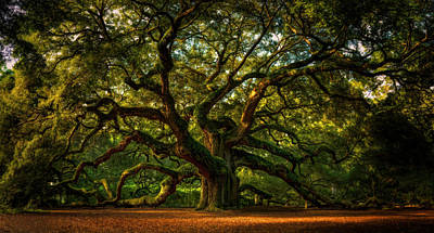 Angel Oak Photograph - Angel Oak by Taylor Franta