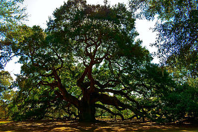Emerson Digital Art - Angel Oak Tree 2004 by Louis Dallara