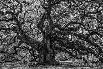 Photograph - Angel Oak Tree Americana by Dale Powell