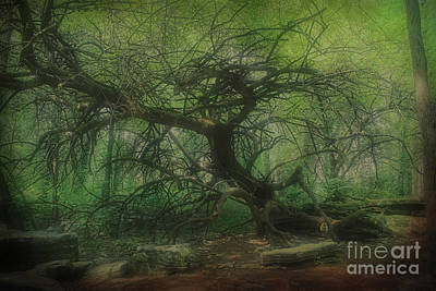 Photograph - Angel Oak Tree - Arrington Vineyard by Luther Fine Art