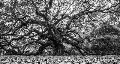 Angel Oak Tree Black And White  Art Print by John McGraw