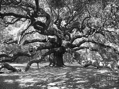 Angel Oak Photograph - Angel Oak Tree Black And White by Melanie Snipes