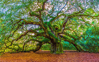 Angel Oak Tree Charleston Sc Art Print