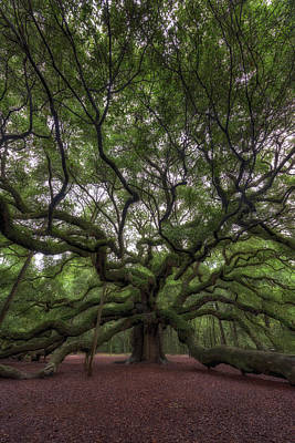 Large Oak Tree Photograph - Angel Oak Tree, Charleston, Sc by Rick Berk