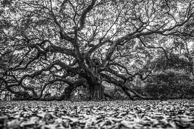 Angel Oak Tree In B And W Art Print by John McGraw