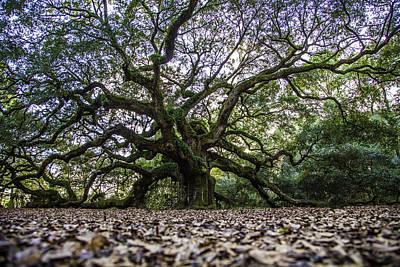 Angel Oak Tree In Color  Art Print by John McGraw