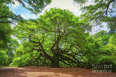 Surrealism Royalty-Free and Rights-Managed Images - Angel Oak Tree in South Carolina  by Michael Ver Sprill