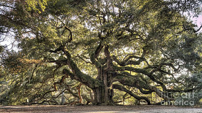 Large Oak Tree Photograph - Angel Oak Tree Live Oak  by Dustin K Ryan