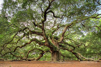 Large Oak Tree Photograph - Angel Oak Tree Of Life by Dustin K Ryan
