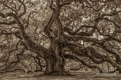 Photograph - Angel Oak Tree Patina by Dale Powell