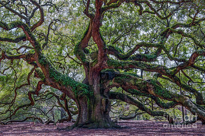 Photograph - Angel Oak Tree Salt Of The Earth by Dale Powell