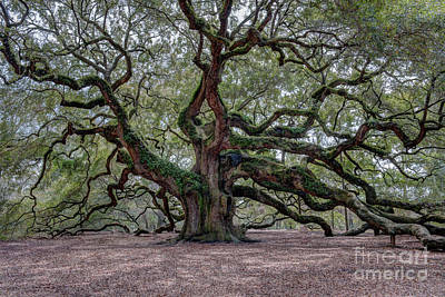 Photograph - Angel Oak Tree Splendor by Dale Powell