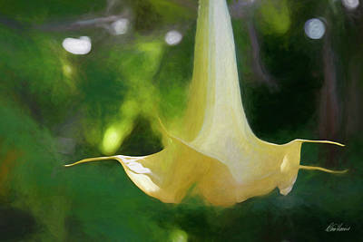 Photograph - Angel Trumpet by Diana Haronis
