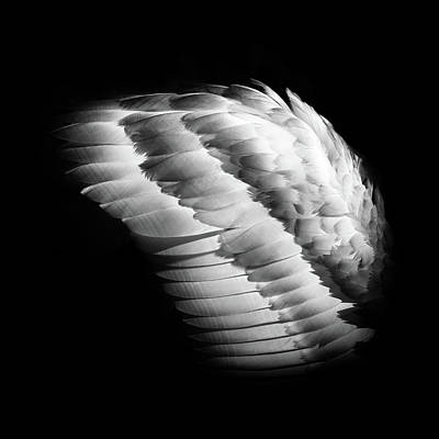 Photograph - Angel Wing by Michael Niessen
