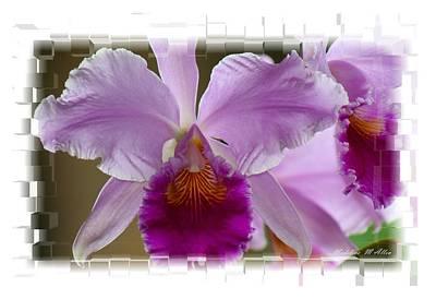 Angel Wings Orchid Art Print by Madeline  Allen - SmudgeArt