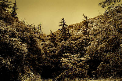 Photograph - Angeles National Forest B W by Joseph Hollingsworth