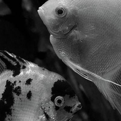 Aquatic Life Photograph -  Angelfish  Eye To Eye by Irina Safonova