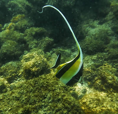 Photograph - Angelfish by Pamela Walton