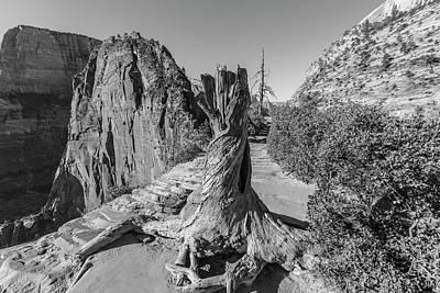 Photograph - Angels Landing Tree Stump  by John McGraw