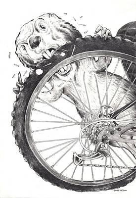 Scott Nelson Drawing - Angry Beaver  by Scott Nelson