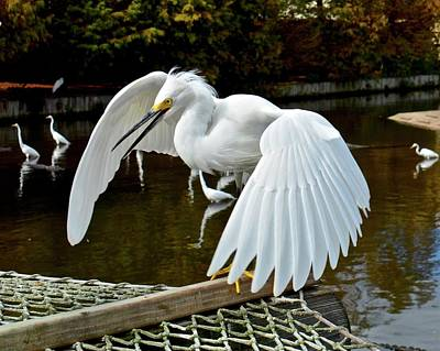 Photograph - Angry Bird by Carol Bradley