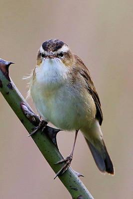 Photograph - Angry Bird by David Bradley