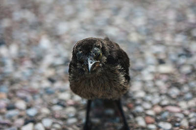 Photograph - Angry Bird by Gregory Alan