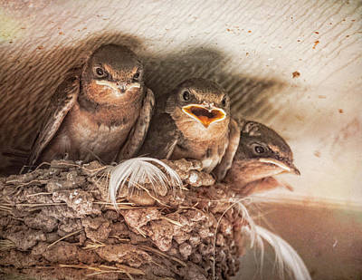 Photograph - Angry Birds by Janice Bennett