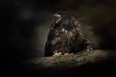 Photograph - Angry Eagle Chick by Jai Johnson