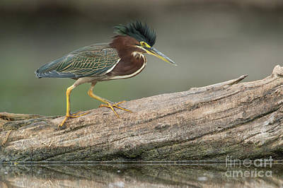 Photograph - Angry Greenie by Bryan Keil