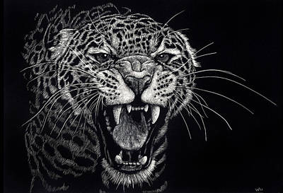 Drawing - Angry Leopard by William Underwood