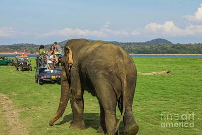 Photograph - Angry Male Elephant Near Safari Jeeps by Patricia Hofmeester