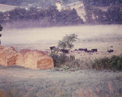 Photograph - Angus In The Mist by Don Youngclaus