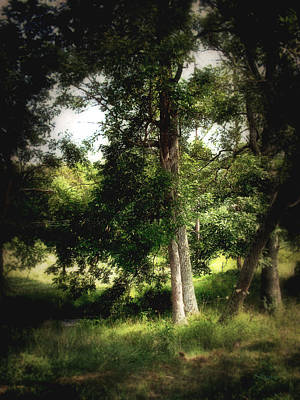 Photograph - Angustown Grove by Cynthia Lassiter