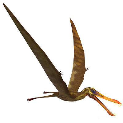 Triassic Painting - Anhanguera Pterosaur by Corey Ford