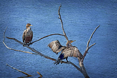 Photograph - Anhinga - Drying by Nikolyn McDonald