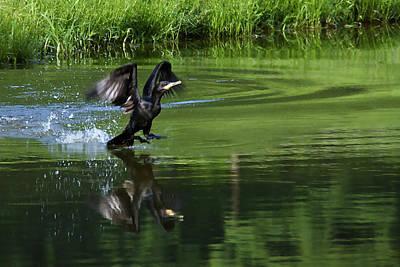 Photograph - Anhinga Landing by Bibi Rojas
