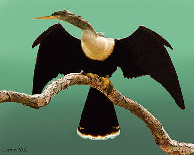 Anhinga Wall Art - Photograph - Anhinga by Larry Linton
