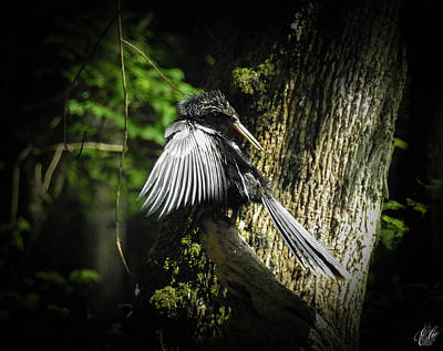 Photograph - Anhinga, No. 14 by Elie Wolf