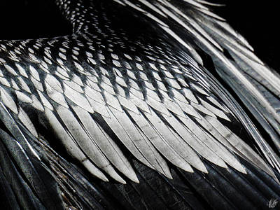 Photograph - Anhinga, No. 15 by Elie Wolf