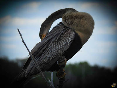 Photograph - Anhinga, No. 18 by Elie Wolf