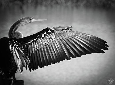 Photograph - Anhinga, No. 27 by Elie Wolf