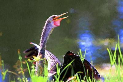 Photograph - Anhinga Painting by Carol Montoya