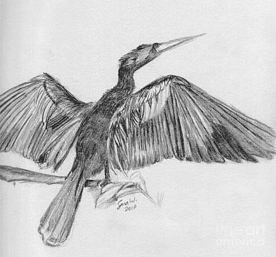 Anhinga Drawing - Anhinga by Sara Williams